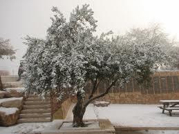 Winter 2013 in Israel