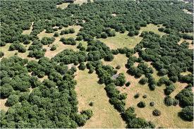 Odem Forest