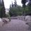 Orson Hyde Memorial Garden *